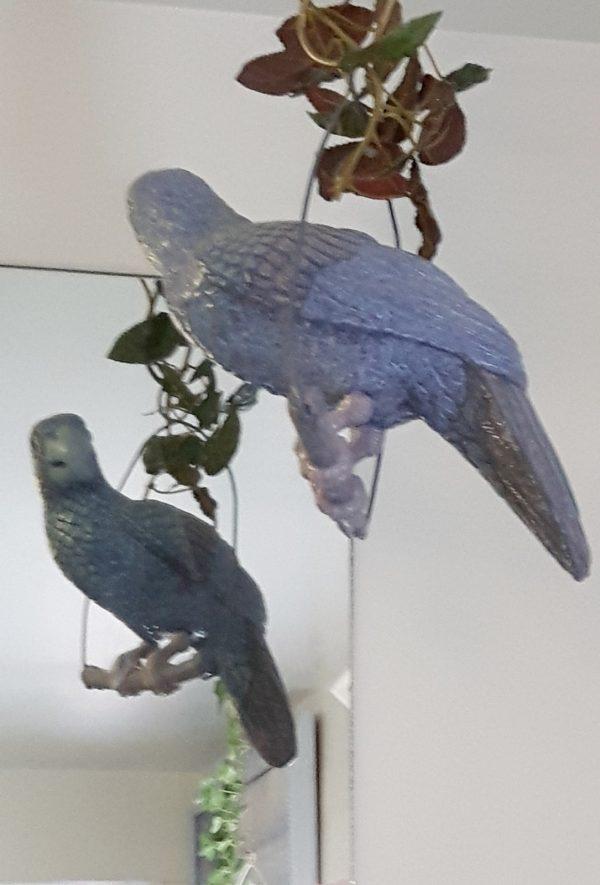 Perroquet sur balançoire